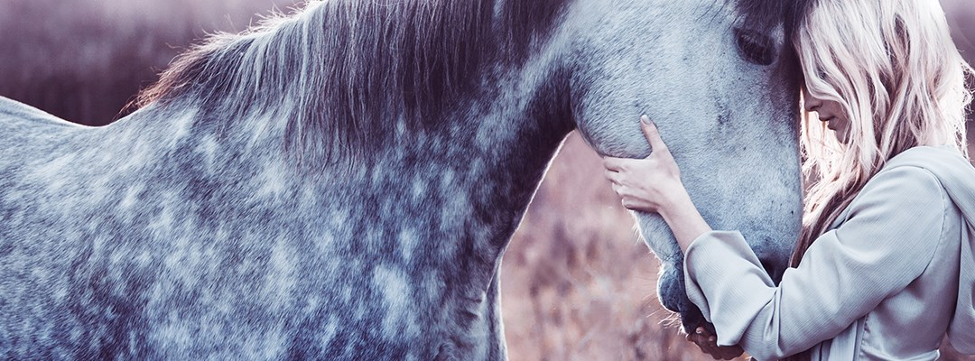 IS GLUCOSAMINE GOOD FOR THE HORSE'S JOINTS?