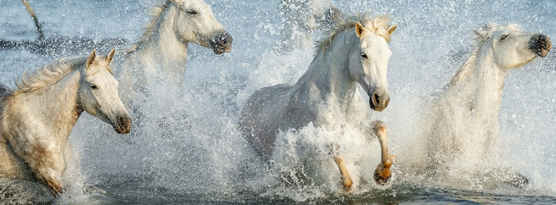 WHEN DOES A HORSE NEED ELECTROLYTES?