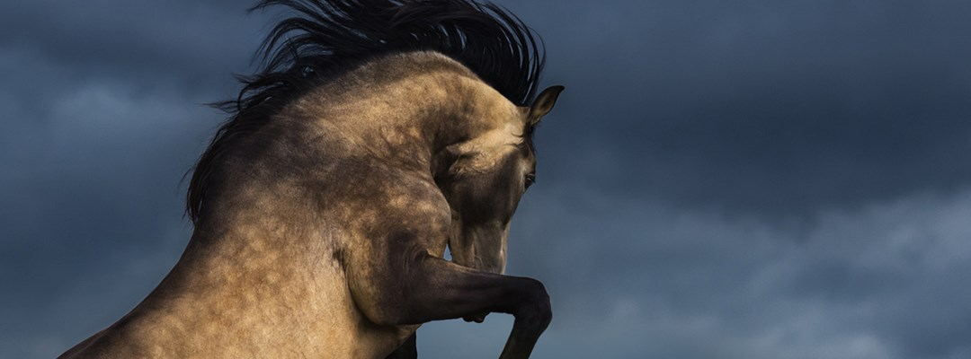 HOW SHOULD YOU FEED A HORSE THAT SUFFERS WITH ANXIETY?